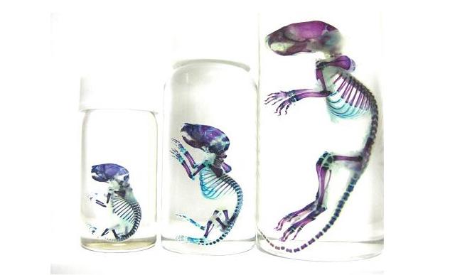 Transparent Specimen in Jar