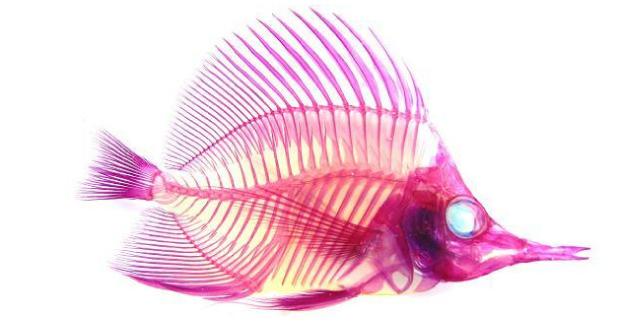 Transparent Specimen Fish